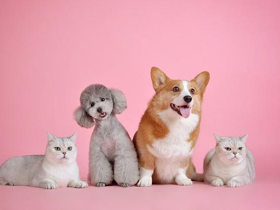Vaksinasi Untuk Anjing Dan Kucing