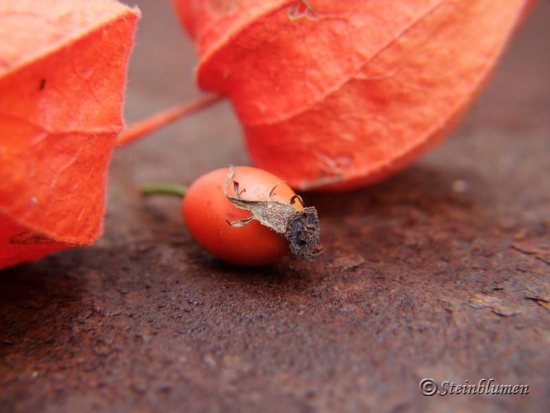 Herbstkranz mit Hagebutten wickeln