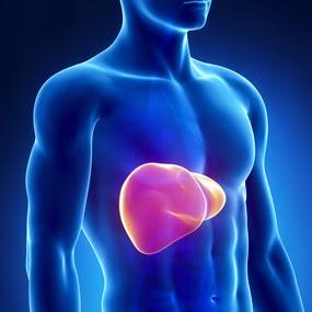 Obat Herbal Untuk Penyakit Hepatitis B