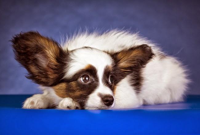 Kamienie moczowe u psów