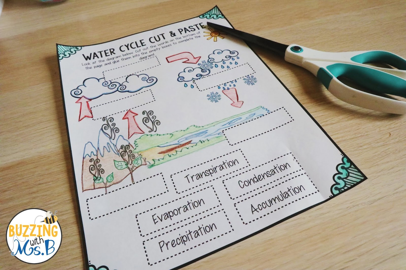 Buzzing With Ms B Water Water Everywhere Water Cycle