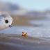 Piper: Նոր անիմացիոն կարճամետրաժ մուլտֆիլմ Pixar-ի կողմից