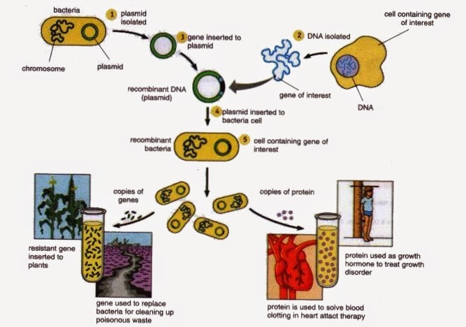Conventional Biotechnology And Modern Biotechnology ~ New Science