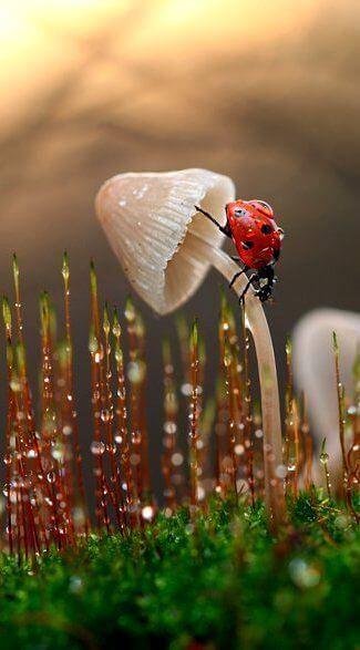 Loving | Ladybug - macro photography - by Vadim Trunov