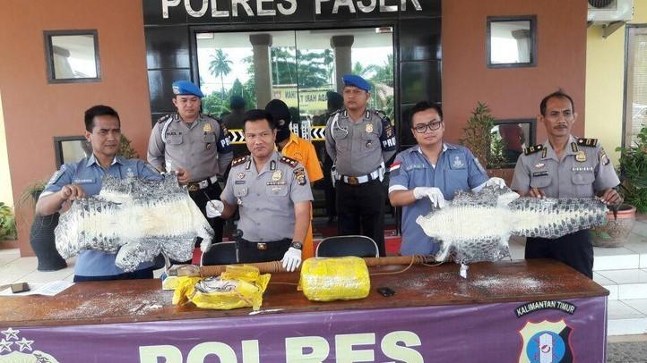 Polisi Tangkap Pelaku Penjualan Kulit Buaya Sebanyak 120 Ekor di Paser Kaltim