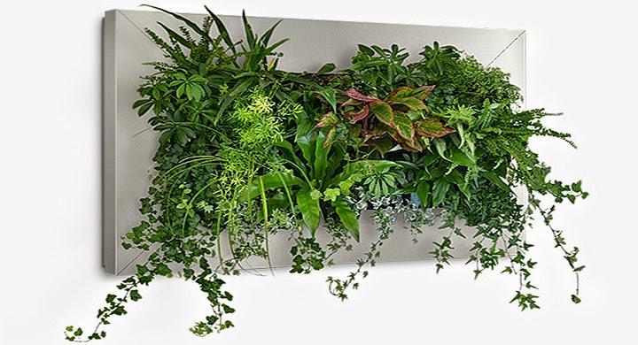 Fitorremediaci n del aire interior 10 plantas - Jardin vertical interior ...