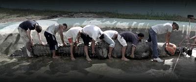 El tamaño de Lolong, el cocodrilo más grande del mundo