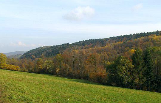 Barwny las porastający stoki Chyrowej.