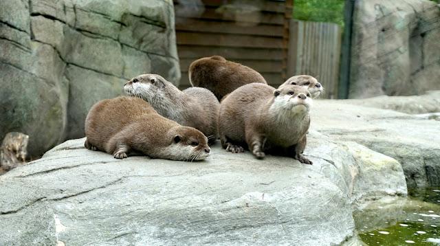 Otters at Paradise Wildlife Park