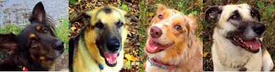 How To Choose A Good Dry Dog Cat Food Kibble Ottawa