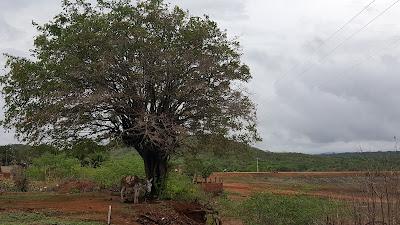 Resultado de imagem para chuva em almino afonso rn