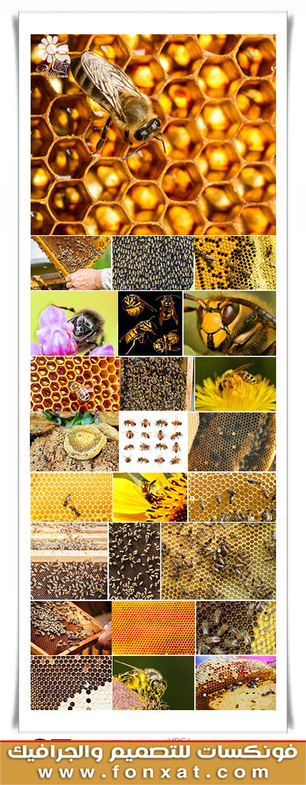Download picture quality with bees, beehive, honey comb