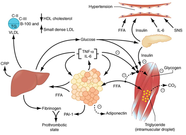 Hubungan Obesitas, Profil Lipid, dan Hipertensi.pptx
