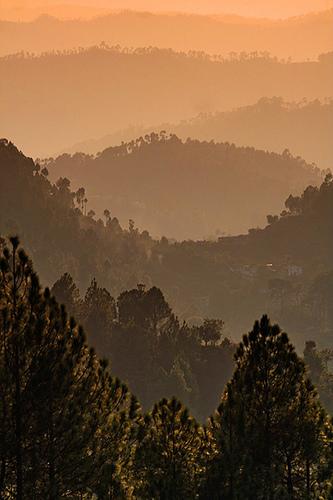 7 BEST Places to Visit in Binsar, Uttarakhand