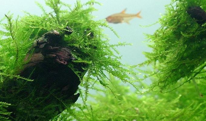 25 Jenis Tanaman Aquascape Bagus Untuk Akuarium Yang Mudah ...