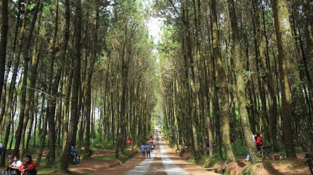 KLHK tetapkan 12,7 Hektar Kawasan Hutan untuk Kegiatan Perhutanan Sosial