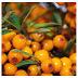Multe fructe mici de culoare galben portocaliu - 6 Litere PixWords