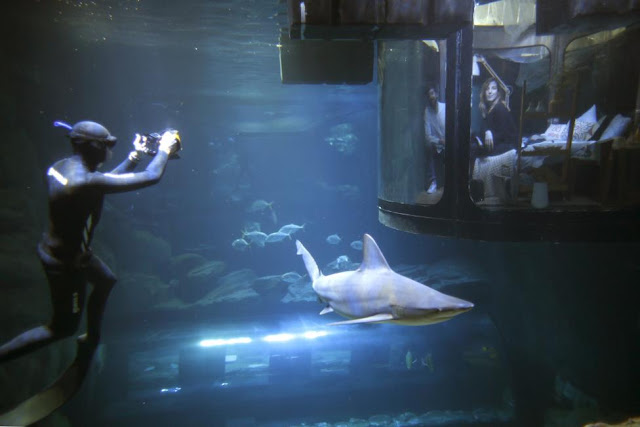 Sleep with Sharks - Airbnb launches its first underwater bedroom where guests are surrounded by sharks