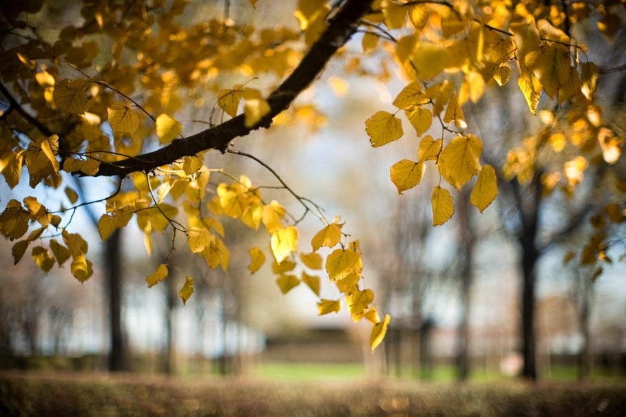 tree-branch-leaves-autumn-nature