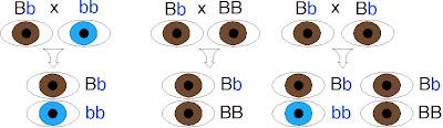propagación de ojos azules· conlosochosentidos.es
