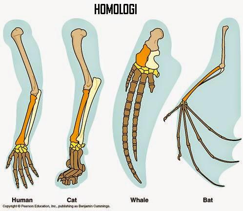 Bionomipa: Indikator 37: Prinsip-Prinsip Penting pada Evolusi