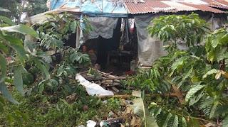 Tujuh Rumah di Pintu Rime Gayo Dirusak Gajah Liar, Satu Keluarga Terpaksa Diungsikan