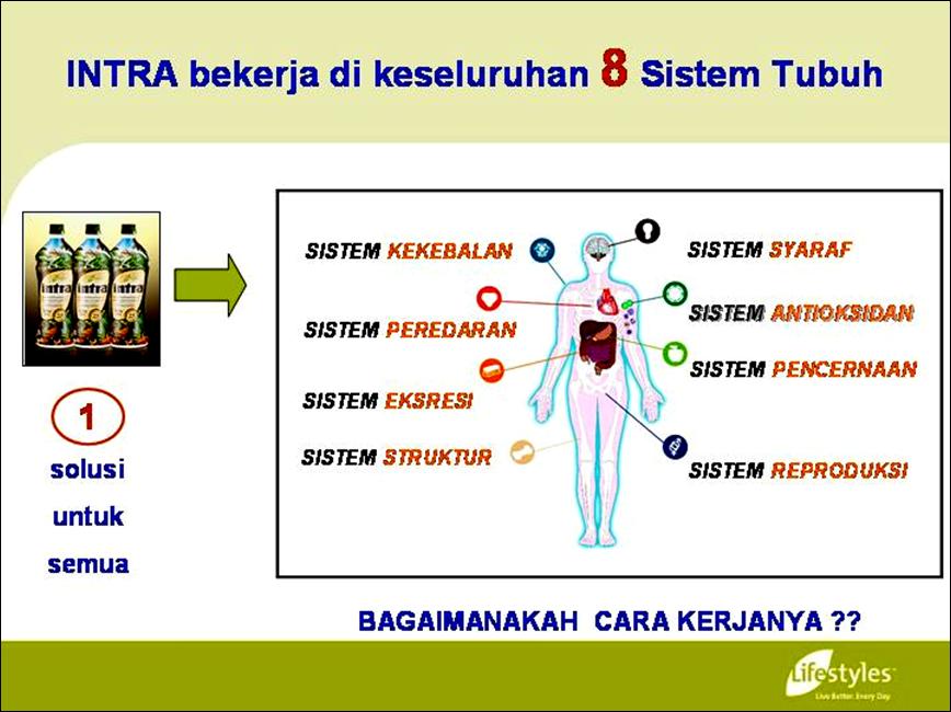 INTRA Lifestyles Indonesia