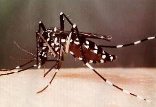alerta sobre el dengue