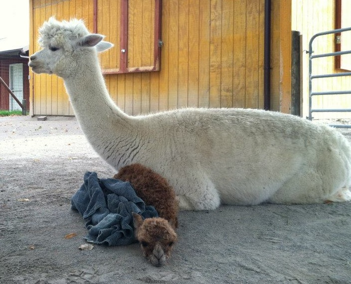 Baby Animals: Cria 9