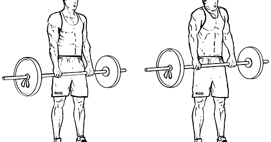 Kinesiology & Sport Review: Exercises in the Weight Room