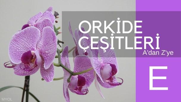 Orkide Çeşitleri E Harfi