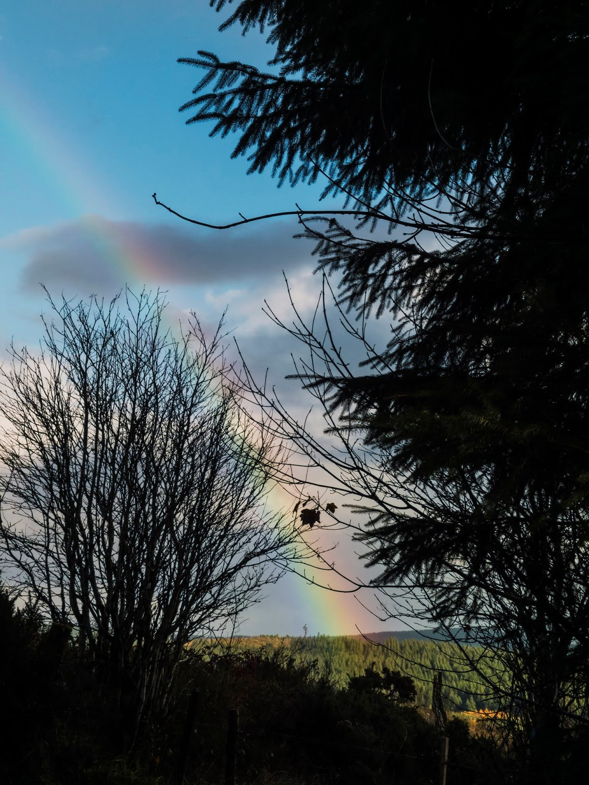 Rainbow over a distant mountain between shaded trees.