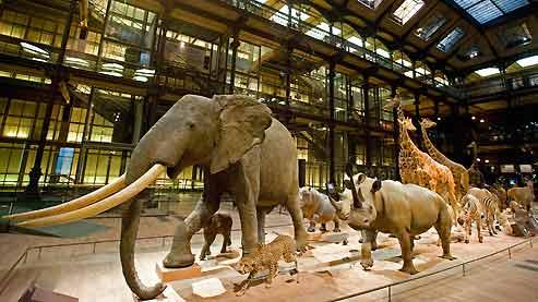 Grande Galerie de l'Evolution para crianças em Paris
