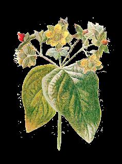 flower image wildflower download digital