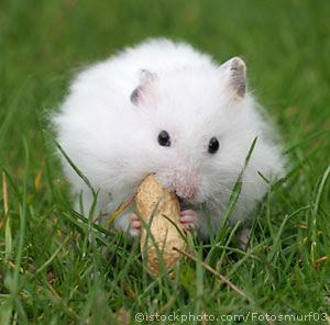 Animal Picture and Description Blog: December 2011