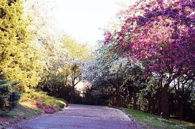 Wiosna w moim obiektywie | zdjęcia