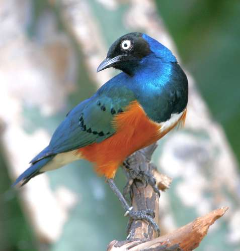 Exotic birds photos  Funny Animal