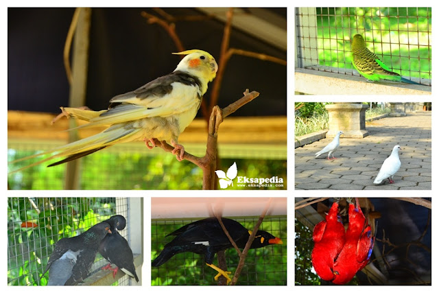 Burung Di taman Kota Salatiga