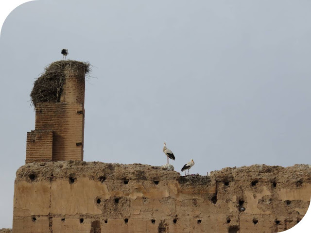 Long Weekend in Marrakech - Sidewalk Safari - Storks on a wall