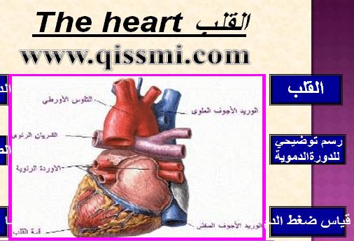 coeur-heart
