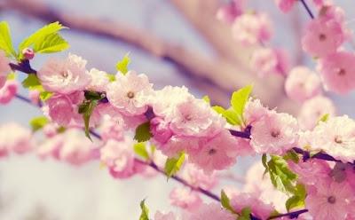 ca-y-est-le-printemps-est-officiellement-la