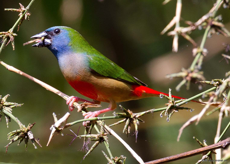 December 2015 Burung Finch