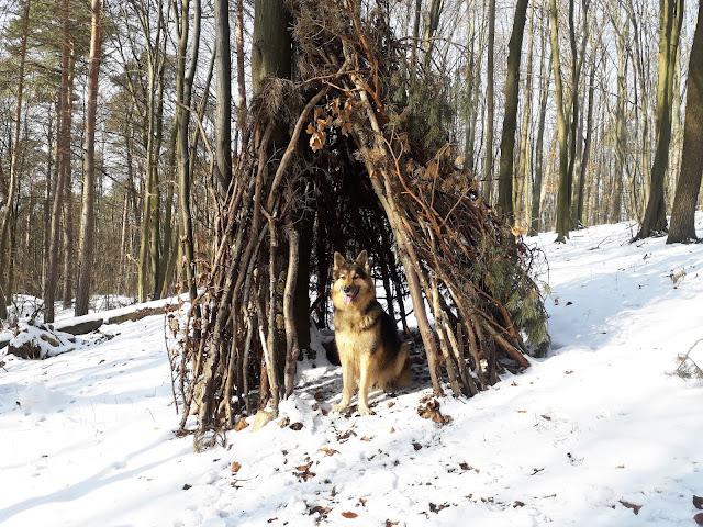 Bezpieczeństwo psa czyli patyk zamień na...szałas
