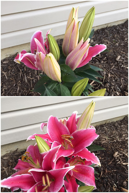 iphone photo before and after flowers blooming
