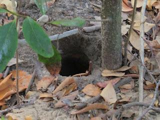 Lairo burrow, crab hole