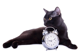 Somehow cats know what time it is, and they don't need to look at a clock.