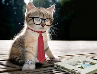 Gambar Kucing Lucu Pakai Kacamata dan Dasi
