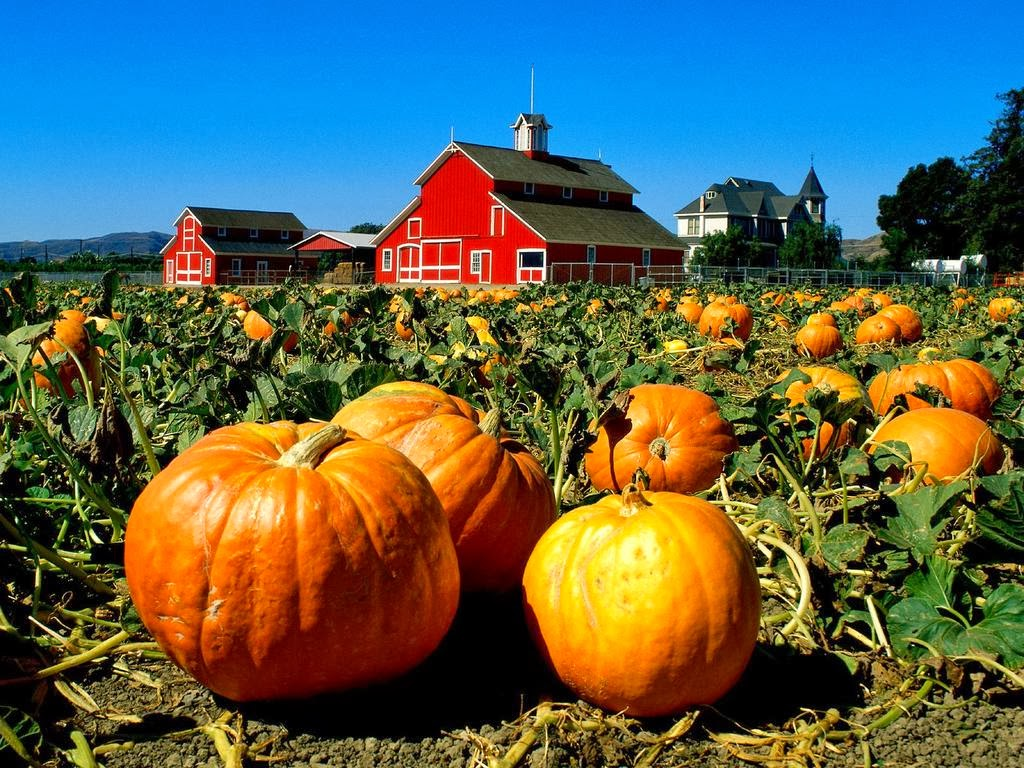 How to store pumpkins - How To Cure And Store Pumpkins