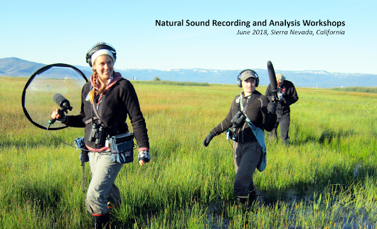 Natural Sound Recording and Analysis Workshops (Cornell Lab)