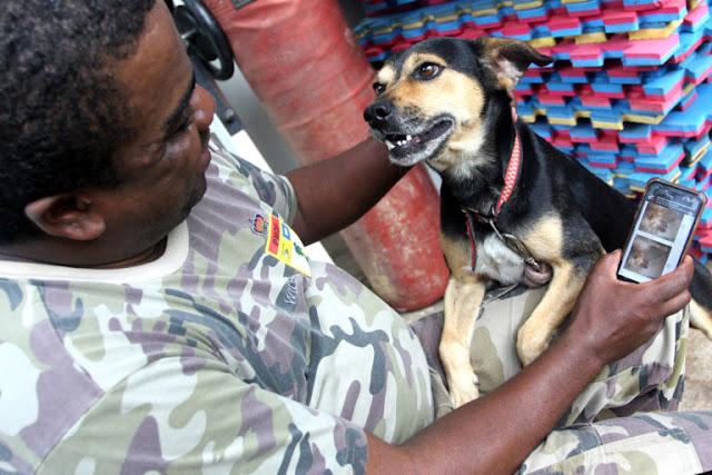 """Polícia Ambiental do DF conta com """"zap adoção animal"""""""